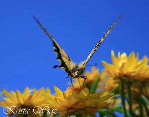 Kims Copy 4._flower_walker_kristawiaz